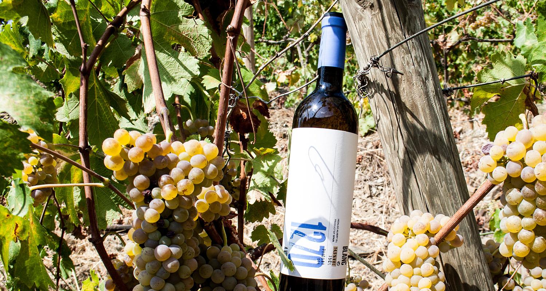 camp de vinyes amb ampolla